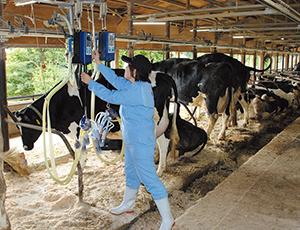 真空ポンプで牛の乳を自動で絞る搾乳機。